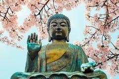 Statue de Bouddha avec des fleurs de cerisier photo stock