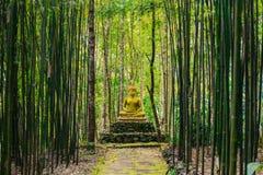 Statue de Bouddha dans la forêt image stock