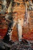 Statue de Bouddha de ruine dans Sukhothai Images libres de droits