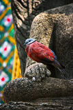 Statue de bouddhiste avec l'oiseau Photo stock