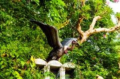 Statue de Buzzard Photo libre de droits