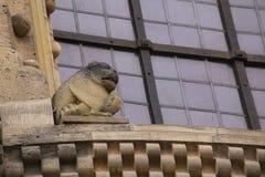 Statue de chien à la cathédrale de Bamberg de fenêtre Photos stock