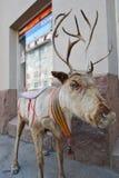 Statue of a deer, Helsinki Stock Photos