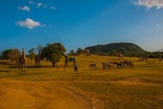 Statue dei dinosauri e dei cavalli Modelli animali preistorici, sculture nella valle del parco nazionale in Baconao, Cuba Immagini Stock Libere da Diritti