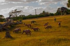 Statue dei dinosauri e dei cavalli Modelli animali preistorici, sculture nella valle del parco nazionale in Baconao, Cuba Fotografia Stock