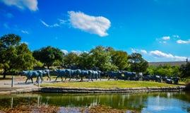 49 statue del bestiame della mucca texana - plaza pionieristica - Dallas, il Texas Immagine Stock