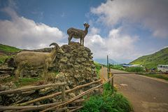 Statue des cerfs communs de Sambar image libre de droits