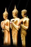 Statue diritte dorate di Buddha in una fila Fotografia Stock Libera da Diritti
