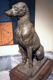 Statue of a dog in Capitoline Museum, Rome, Italy