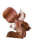 Statue en bois de poissons Photos stock