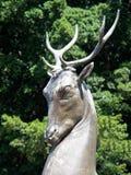 Statue en bronze, cerf commun, Sydney, Australie images stock