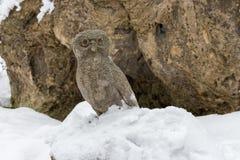 Statue en pierre de hibou dans la neige contre la roche Monument d'oiseau de faucon Symbole de sagesse Photographie stock libre de droits