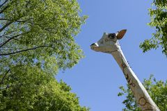 A giraffe in the city Stock Photography