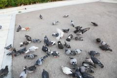 Pigeons at Athens, Greece. Statue in Green Garden - Athens, Greece Royalty Free Stock Photo