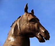 Statue horse portrait Stock Images