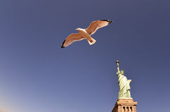 Statue Of Liberty - Seagull Stock Images