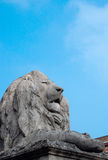 Statue of lion. Outside of Fitzwilliam museum royalty free stock photo