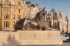 Statue of Lion in gold light  on Trafalgar Square in London, Uni. Ted Kingdom Royalty Free Stock Images