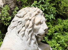 Statue of a lion, the head, white marble Royalty Free Stock Photo