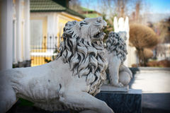 Statue of lion Stock Image