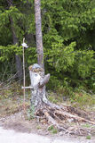 Statue made of old pine tree stump Stock Image