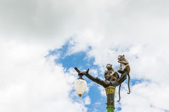 Statue of a monkey family on lamp post on blue sky. Royalty Free Stock Images