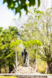 The statue in the national park. With tree stock photo