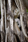 Statue of person trapped in banyon tree Stock Photography