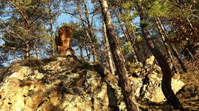 Statue of a phoenix in the midst of a forest. Statue of a phoenix bird built on a rock in the midst of a forest royalty free stock photography