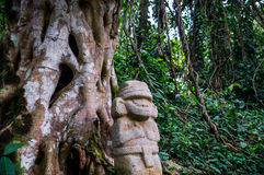 Statue in the rainforest in San Agustin. San Agustin, Colombia: A mysterious statue of a male person  stands in the rainforest next to an old tree with large Stock Images