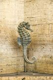 Statue of sea horse on the background stone wall of tuff fountain stock photography