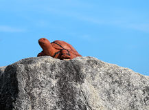 Statue of a turtle Royalty Free Stock Photo