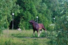 Statue von Elchen im Landschaftpark Stockbild
