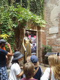 Statue von Juliet in Verona Stockbild