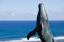Statue of whale breaching with sea Stock Photos
