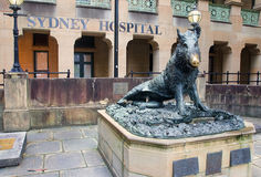 A statue of a wild pork before Sydney Hospial Stock Images