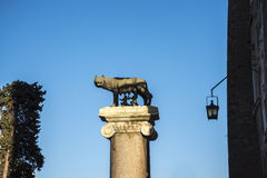 Statue of the She Wolf suckling Romulus and Remus on the Capitoline Hill in Rome Italy Royalty Free Stock Image