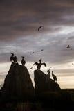 Statuen eines fahren schöne Vogels auf dem Morecambe die Küste entlang lizenzfreies stockfoto