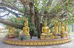 Statues of Buddha under an old tree in Vientiane Stock Image