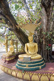 Statues of Buddha under an old tree in Vientiane Stock Photos