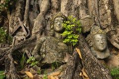 Statues cassées des femmes par des racines d'arbre dans la vieille ville Chiang Mai images libres de droits