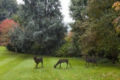 Statues of Deer Grazing Stock Photography