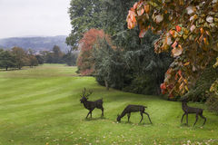 Statues of Deer in the Park Stock Photo