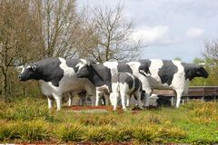 Ceramic statues of Dutch cows in meadow,Holland Stock Photos