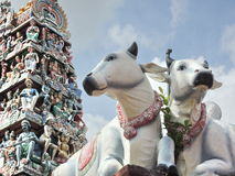 Statues of holy cows in Singapore with decorated ornamental religious tower Royalty Free Stock Images