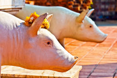 Statues of pigs in Thailand decorated with flowers Stock Images