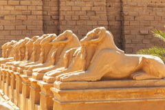 Statues of Ram-headed sphinxes in Karnak temple Royalty Free Stock Photography