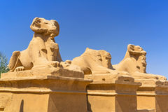 Statues of Ram-headed sphinxes in Karnak temple Royalty Free Stock Images