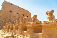 Statues of Ram-headed sphinxes in Karnak temple Stock Image