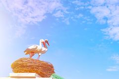 Statues of two storks. stock photos